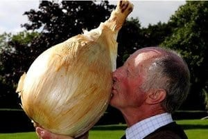 Peter Glazebrook from Newark kisses his world record breaking onion that weighed in at 18lbs 1oz, beating his previous world record by almost 2ozs, at the Harrogate Autumn Flower Show. PRESS ASSOCIATION Photo. Picture date: Friday September 14, 2012. Glazebrook took six first prize awards in the Giant Vegetable classes at the show. Photo credit should read: John Giles/PA Wire